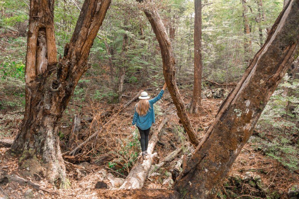 Bailey walks along a log on the Mt Crichton loop Track