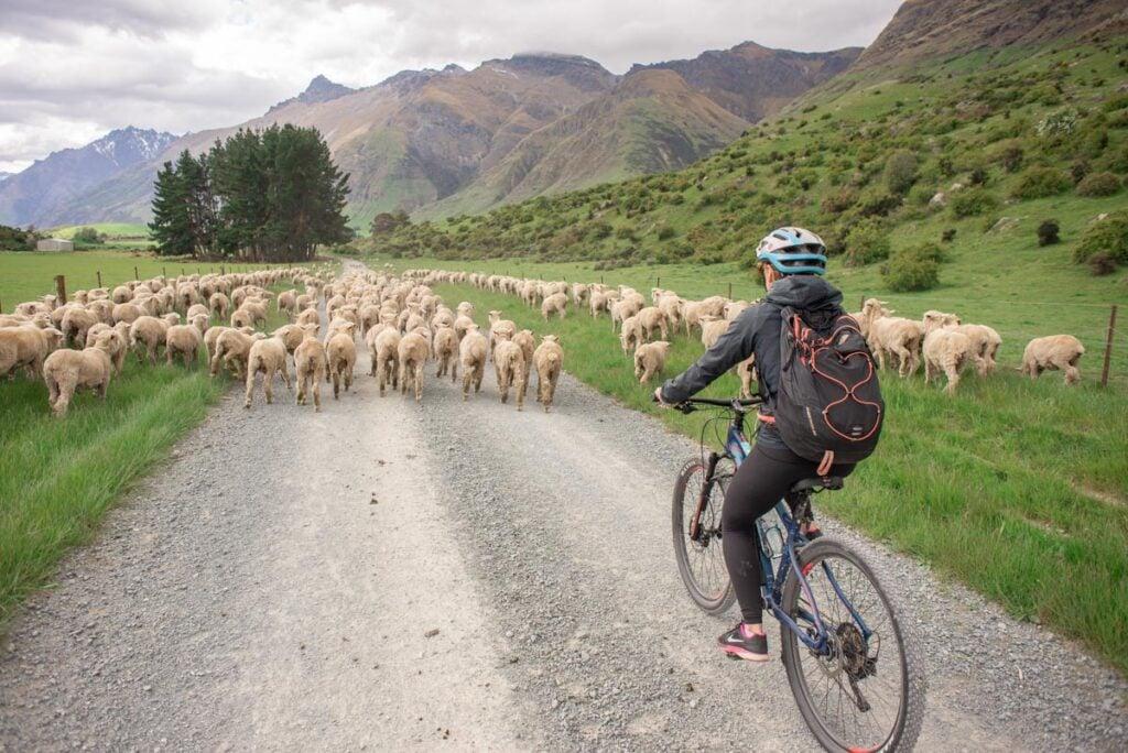 Bike riding on the Mt Nicholas Farm near Queenstown