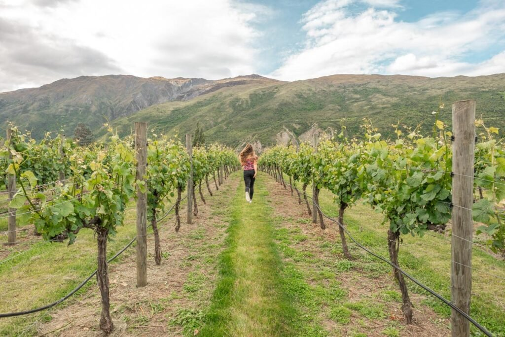 A lady runs through grape vines in the Gibbston valley between Queenstown and Wanaka