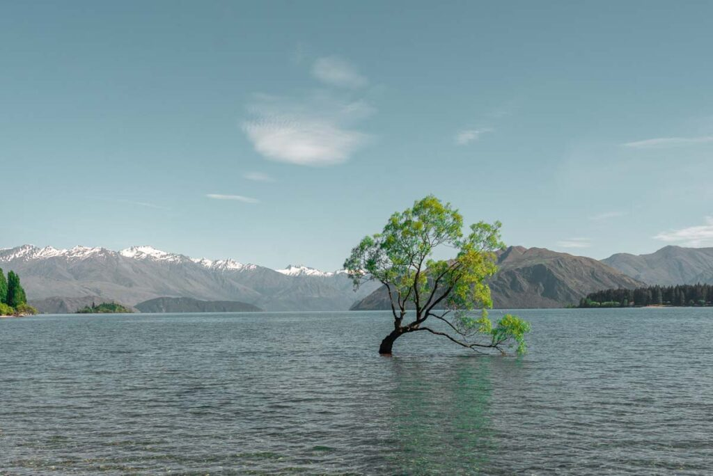 The lone Wanaka Tree during the day