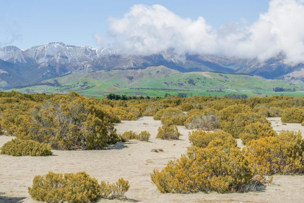 Views from a viewpoint of the South West New Zealand World Heritage Area