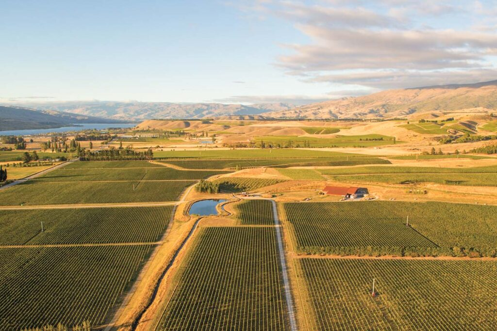 The grape vines from above at Amisfield Restaurant & Cellar Door