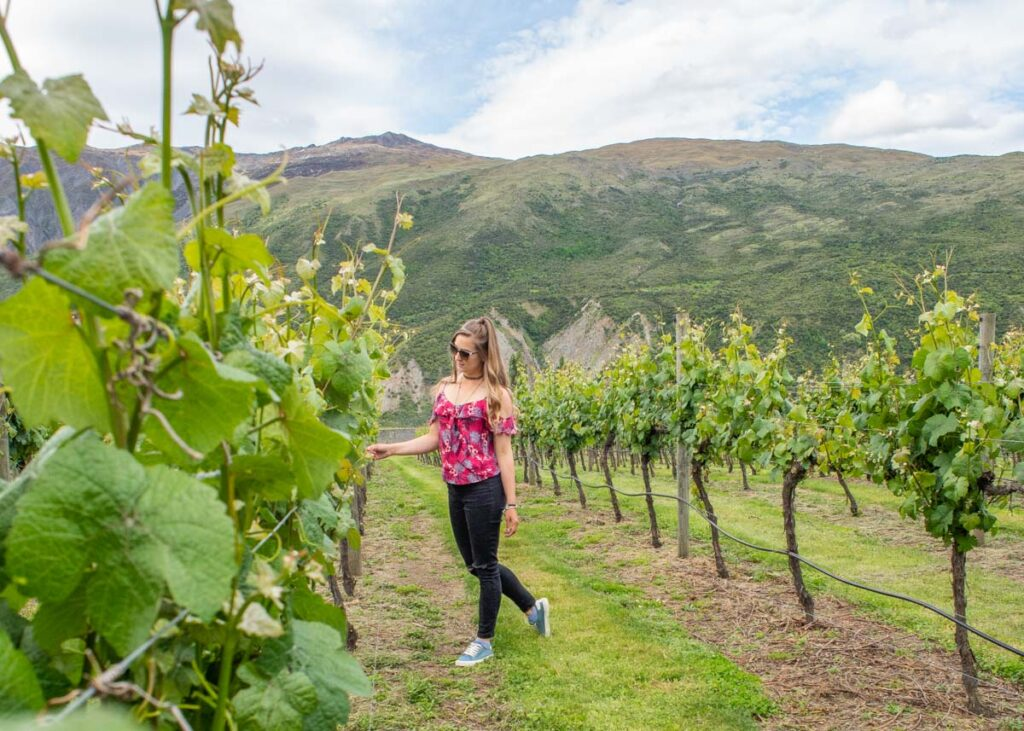 A lady in the vines in the Otago Wine Region near Queenstown on a wine tour