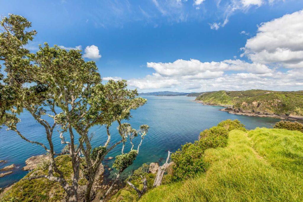 Views on the Bay of Islands Coastline Walk